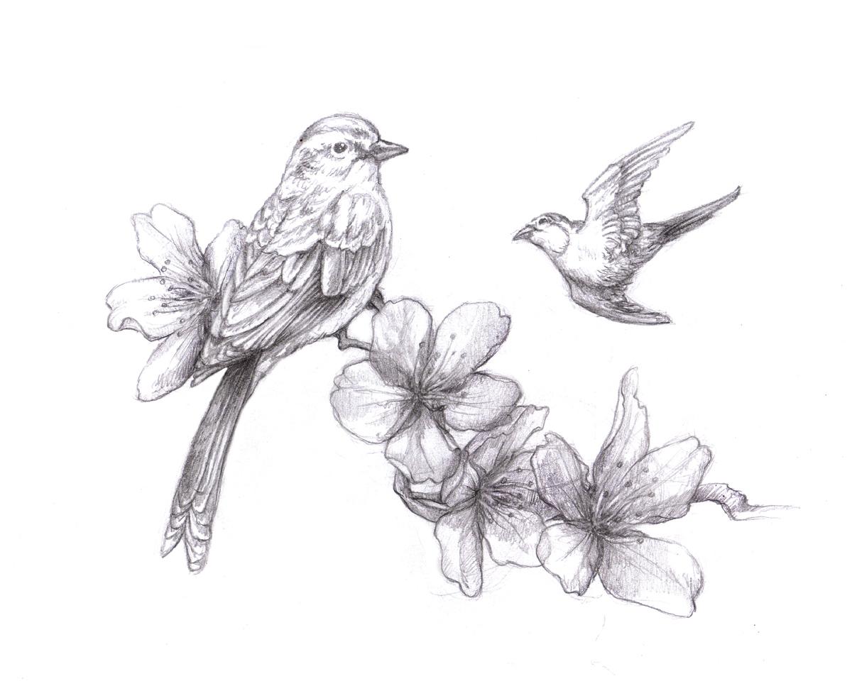 Drawn sakura blossom sparrows Pretty picture last nights some
