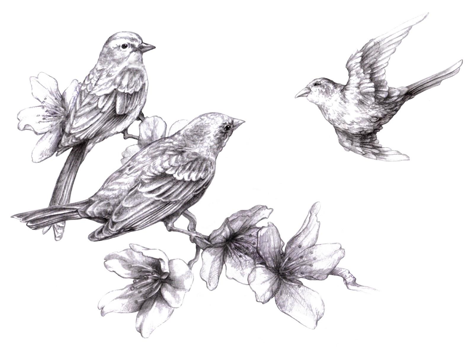 Drawn sakura blossom sparrows Cherry Magellin added new have