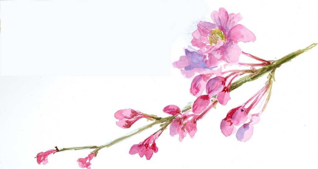 Drawn sakura blossom spring tree More the in front coincidence?