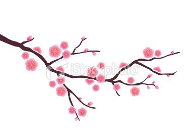 Drawn sakura blossom flower petal Blossom House best Images Drawings