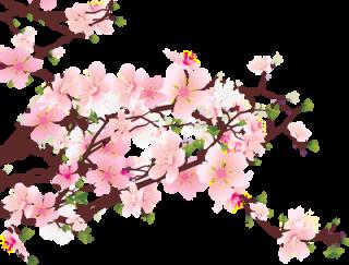 Drawn sakura blossom transparent Blossom View Cherry topic [The