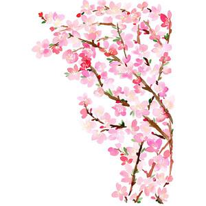 Drawn sakura blossom transparent Blossoms Art Cherry Print Fillers