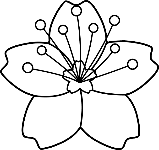 Drawn sakura blossom transparent To Anese How Flower Blossoms