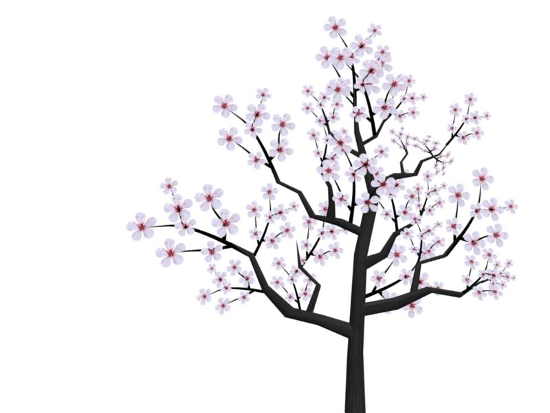 Drawn sakura blossom transparent Cherry Cartoon Cartoon Cherry Blossom