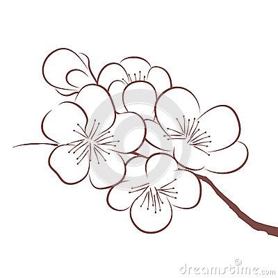 Drawn sakura blossom vector Cherry Google craft Search