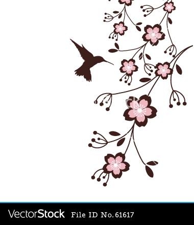 Drawn sakura blossom vector Blossoms Hummingbird art vectors Spring