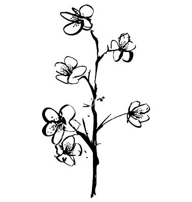 Drawn sakura blossom vector Illustration Robot Vector on Cherry