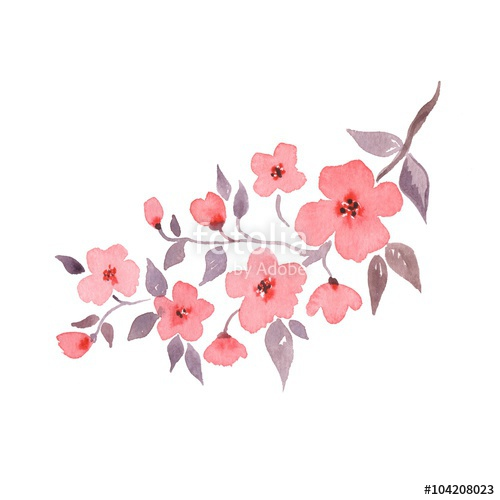 Drawn sakura blossom watercolor 1 watercolor Hand blossom blossom