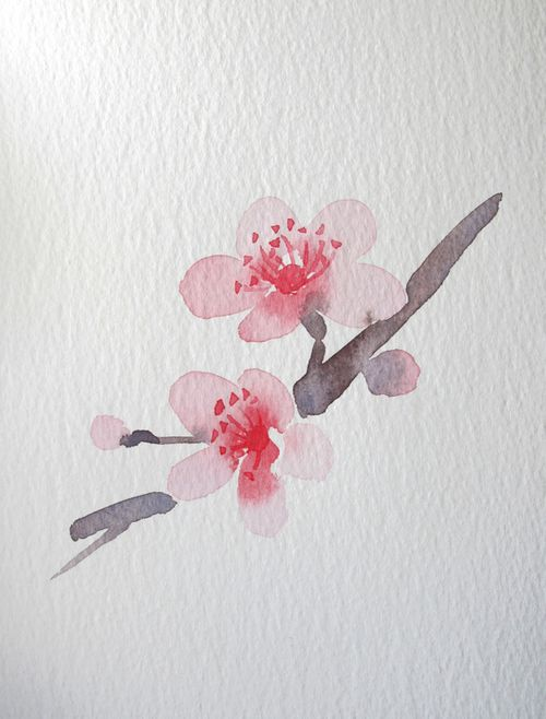 Drawn sakura blossom watercolor Images 17 on Flowers watercolor