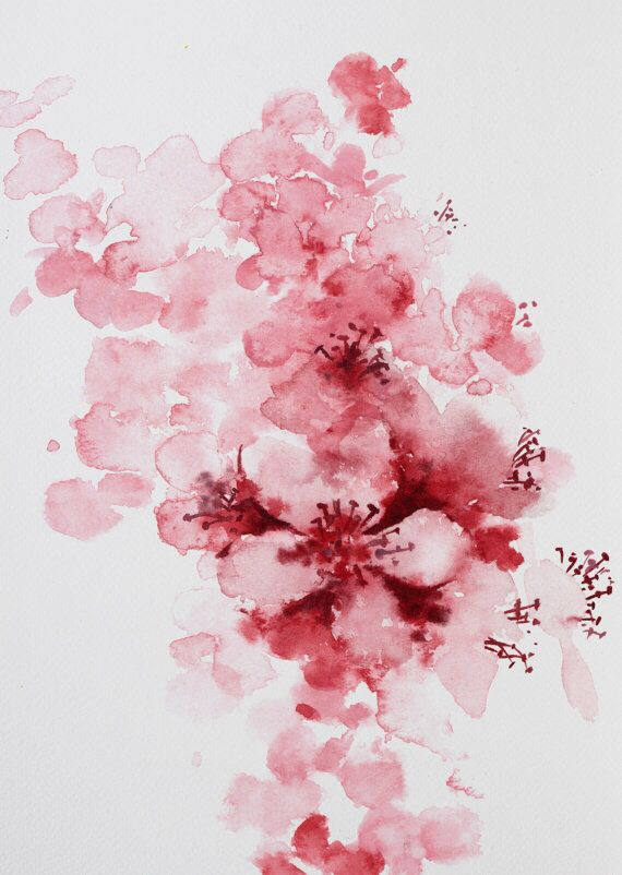 Drawn sakura blossom watercolor Best up blossom blossom Cherry