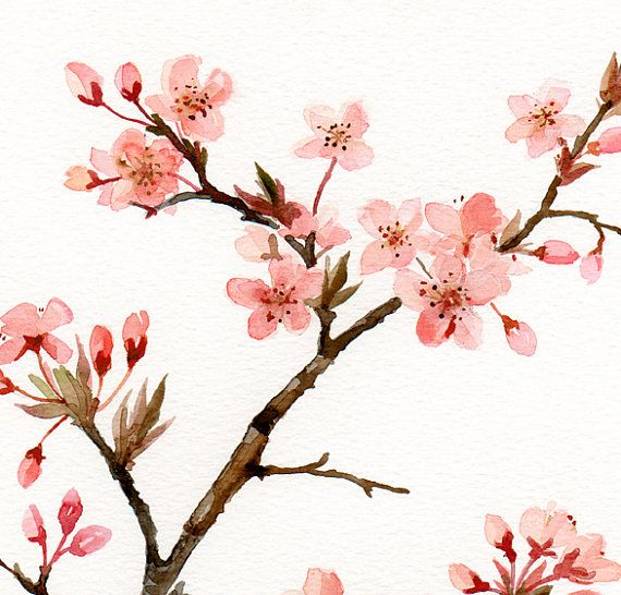 Drawn sakura blossom watercolor Pinterest Watercolor Floral Japanese watercolor