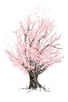 Drawn sakura blossom white background Because Blossom the Vector this