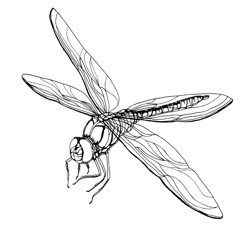Drawn samurai dragonfly Coloring For Coloring Printable Dragonfly