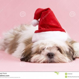 Drawn santa hat small With Apso 8756402 Stock Photography