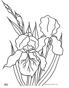 Drawn sanya coloring book Name File flowers_coloring_page  Color