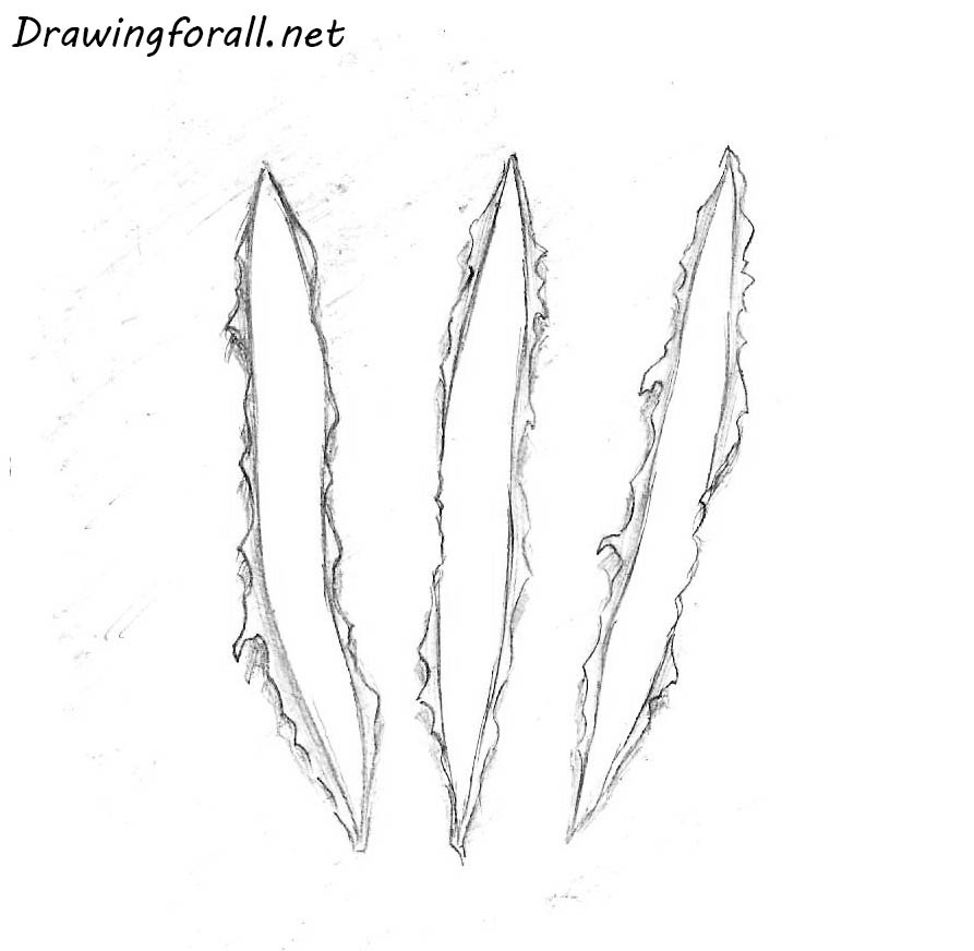 Drawn scar claw Claw draw how net to