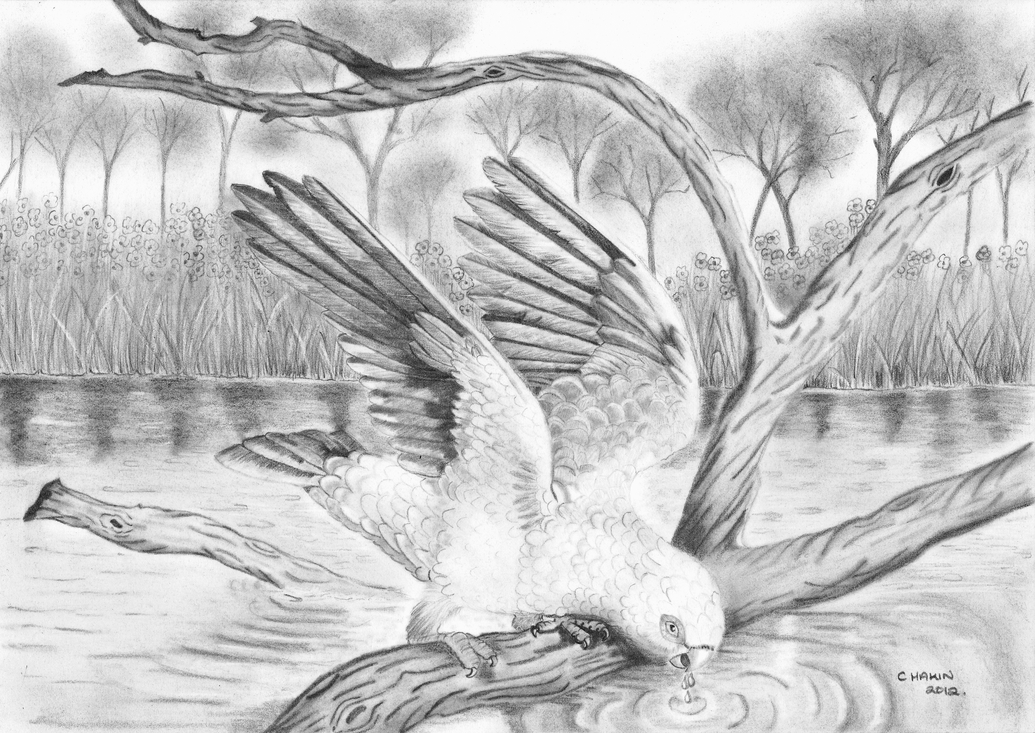 Drawn scenic natural scenery Pinterest scenery of draw of