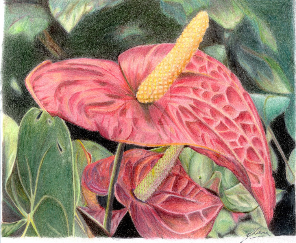Drawn scenic colored pencil Library Drawing Of – Drawing