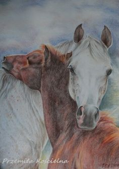 Drawn scenic portrait Photos from HORSE drawing horse