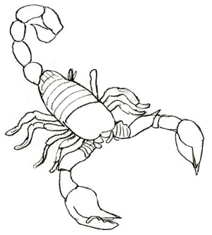Drawn scorpion Scorpion a How Draw Draw