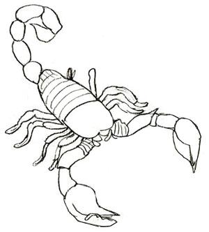 Drawn scorpion #1