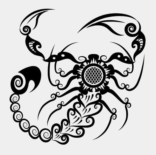 Drawn scorpion Pattern Pattern Hand Vector Decoration