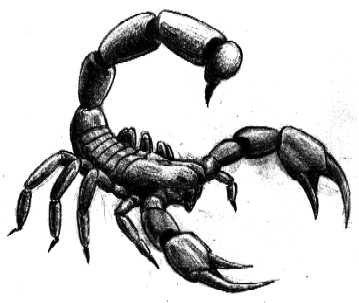 Drawn scorpion Free Art Scorpion  Clip