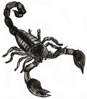 Drawn scorpion #2