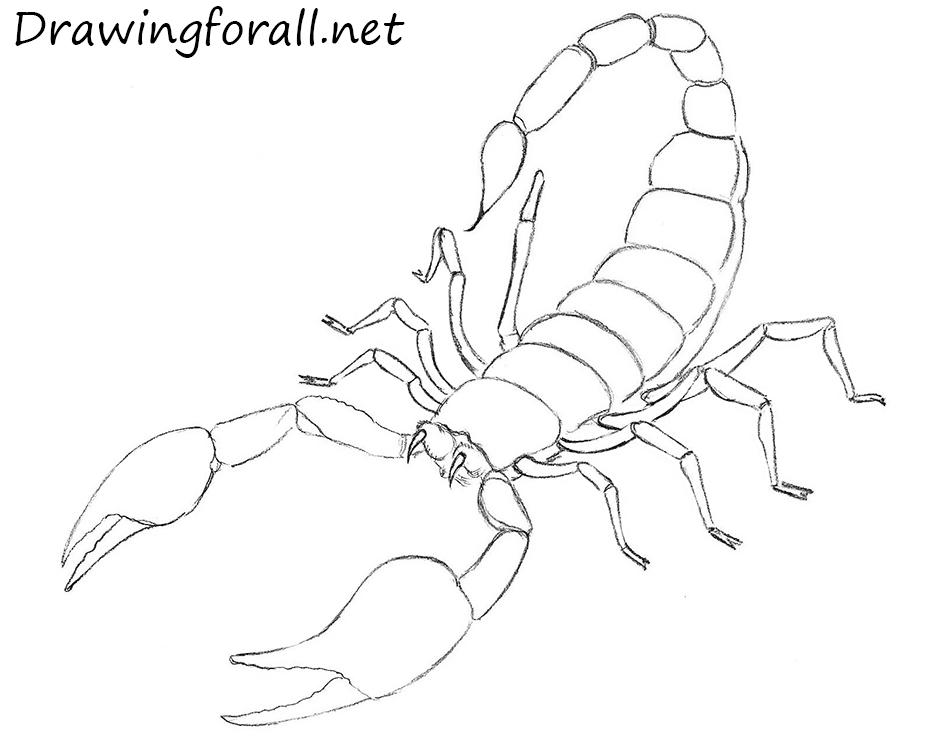 Drawn scorpion #4