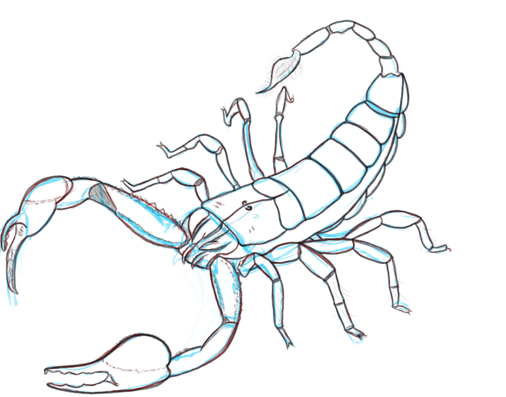 Drawn scorpion bug To like lovely print (Yes