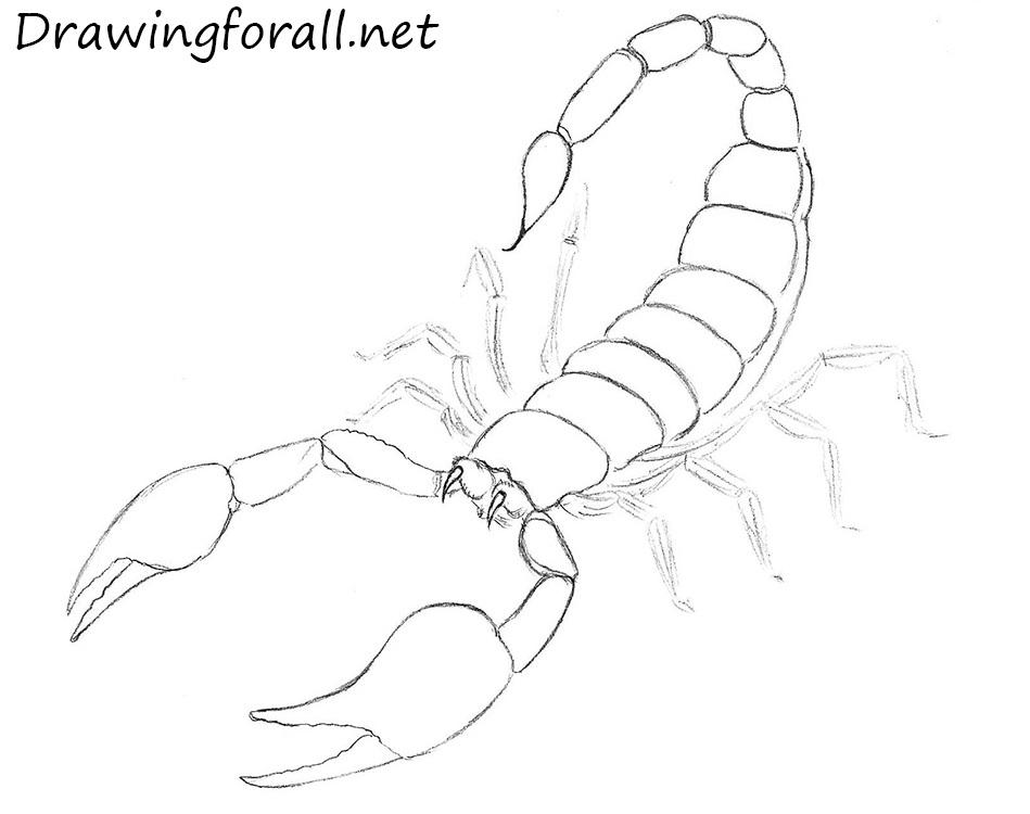 Drawn scorpion cartoon Net Draw draw to how
