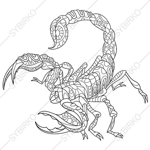 Drawn scorpion coloring  Pages Adult illustration for