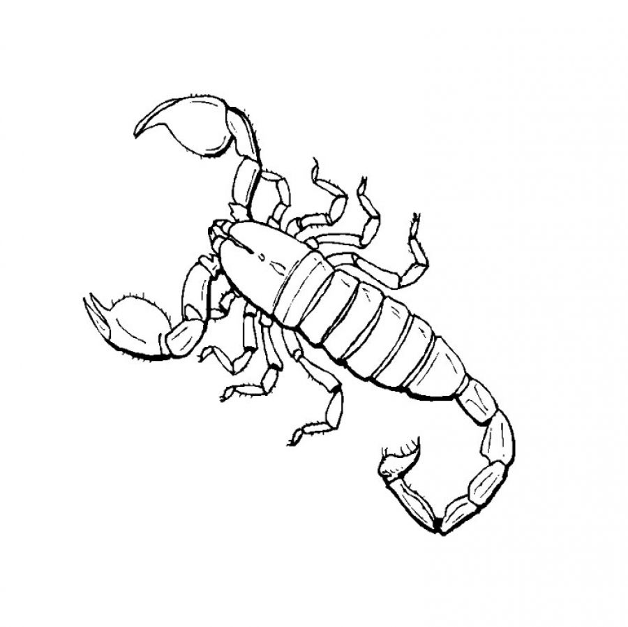 Drawn scorpion coloring 13 Print coloring pages coloring
