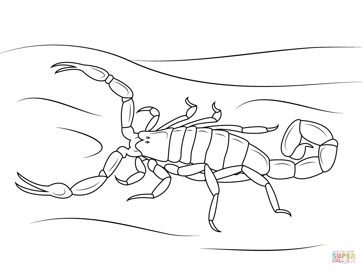 Drawn scorpion coloring Coloring to (compatible Printable or
