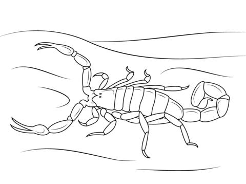 Drawn scorpion coloring page Striped Click page Pages printable