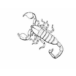 Drawn scorpion coloring page  Page Scorpion Coloring