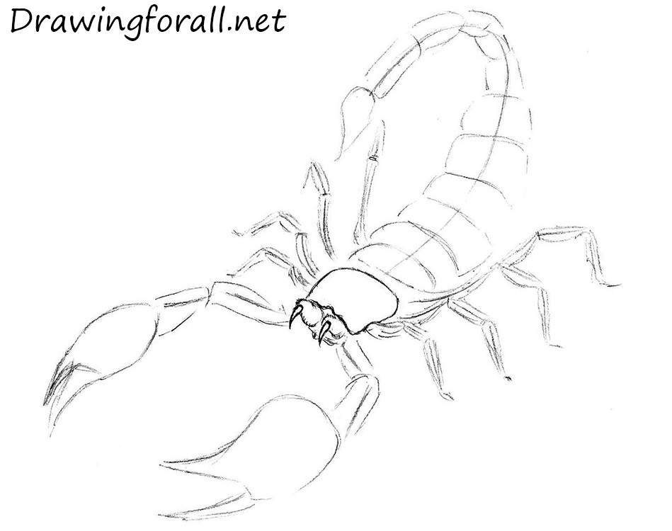 Drawn scorpion outline To how to DrawingForAll net