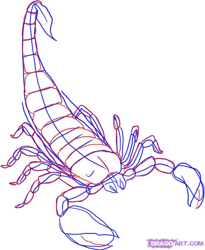Drawn scorpion outline Draw Draw To Draw How