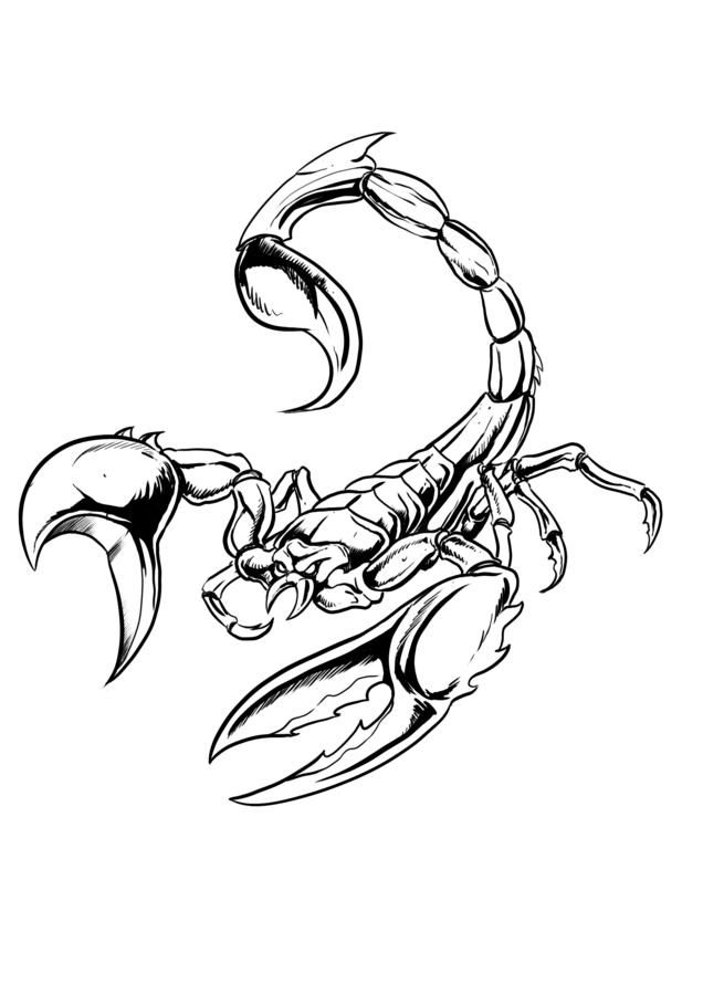 Drawn scorpion outline Scorpions jpg (636×900) on Pinterest