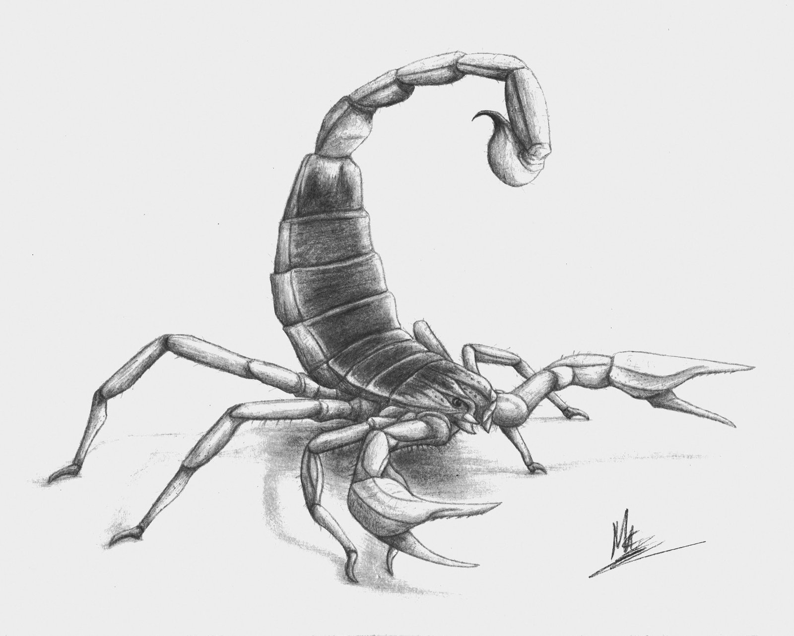 Drawn scorpion pencil drawing On Scorpion by Giganotosaur by