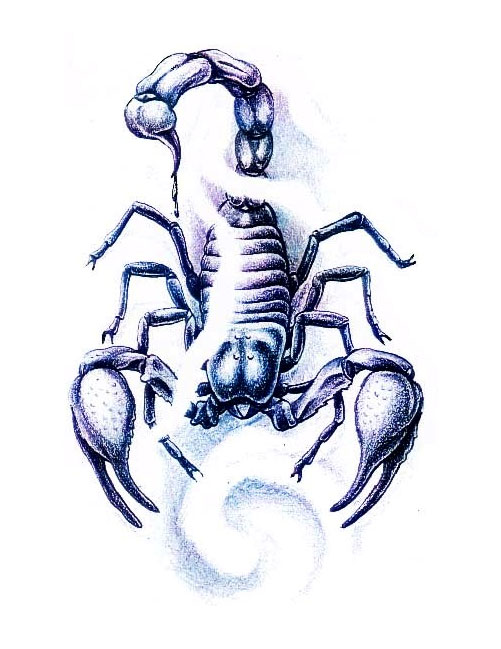 Drawn scorpion realistic (501×649) Realistic tattoos  Scorpion