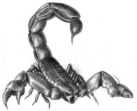 Drawn scorpion realistic Is a 10 Painting best