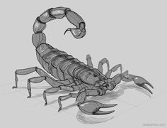 Drawn scorpion realistic Draw for our Directed Habitat