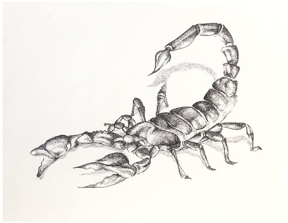 Drawn scorpion scorpio Drawing and for Drawing Art