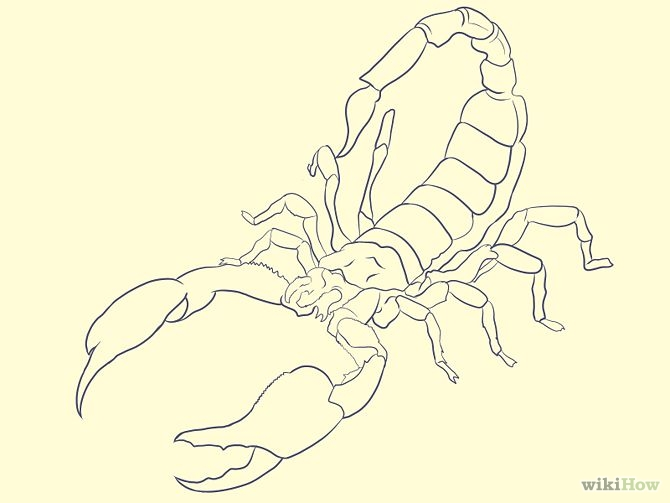 Drawn scorpion simple To (with Pictures) a Scorpion