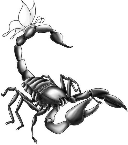 Drawn scorpion tatoo Sting warmest realistic or be