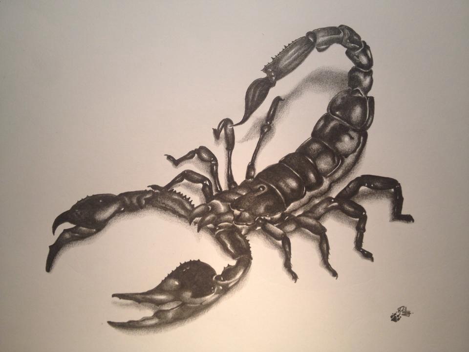 Drawn scorpion tatoo Dad Tattoo drawing Scorpion and