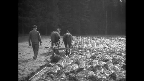 Drawn scythe agricultural Scythe Stock / Highlights1615 Fields