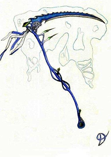 Drawn scythe elemental Tail Fairy  251 541)