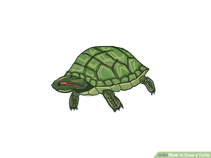 Drawn sea turtle japanese turtle Step Ways a a Image